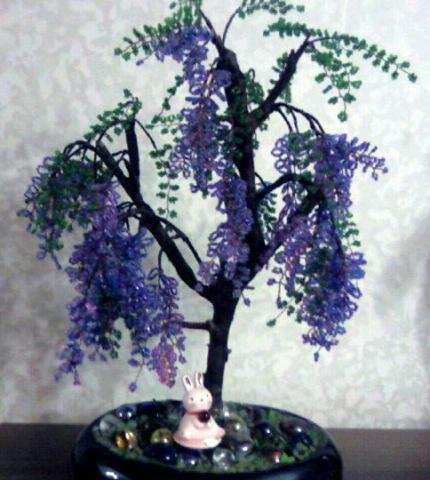 деревья глициния схема